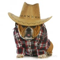 Pets Apparel and Accessories