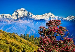Spices and Herbs in Nepal | Export Portal